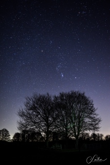 orion above the trees