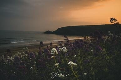 flower sunset 2